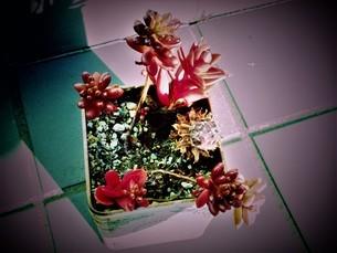 冬の花達の写真素材 [FYI04115802]