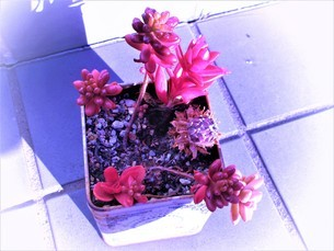 冬の花達の写真素材 [FYI04115803]