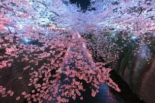 目黒川の桜 桜銀河の写真素材 [FYI04115926]