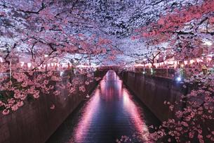 目黒川の桜 桜銀河の写真素材 [FYI04115930]