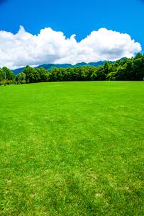 芝生広場と夏空の写真素材 [FYI04115957]
