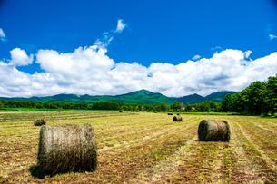 八ヶ岳農場牧草地と夏空の写真素材 [FYI04115958]
