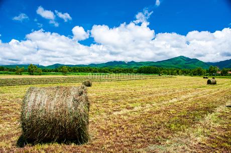 八ヶ岳農場牧草地と夏空の写真素材 [FYI04115959]