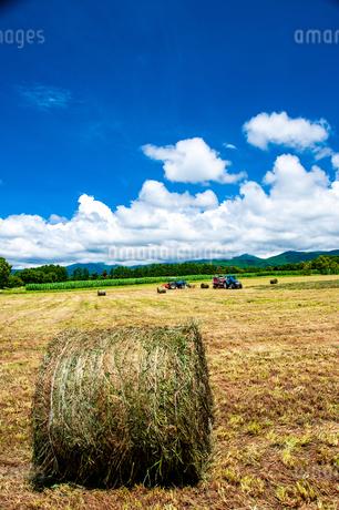 八ヶ岳農場牧草地と夏空の写真素材 [FYI04115965]