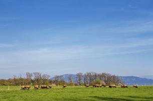スイス、ジュネーブの田園風景の写真素材 [FYI04116001]