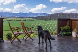 遠くを眺める犬の写真素材 [FYI04116030]