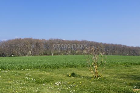 スイス、ジュネーブの田園風景の写真素材 [FYI04116033]