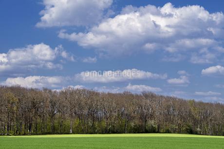 スイス、ジュネーブの田園風景の写真素材 [FYI04116034]