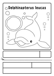シロイルカ ぬりえ 応募用紙のイラスト素材 [FYI04116159]