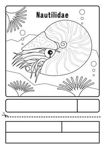 オウムガイ ぬりえ 応募用紙のイラスト素材 [FYI04116174]