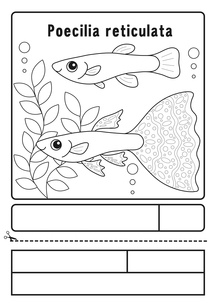 グッピー ぬりえ 応募用紙のイラスト素材 [FYI04116188]