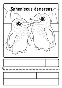 ケープペンギン ぬりえ 応募用紙のイラスト素材 [FYI04116200]