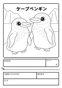 ケープペンギン ぬりえ 応募用紙のイラスト素材 [FYI04116201]