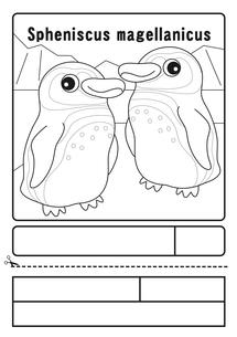 マゼランペンギン ぬりえ 応募用紙のイラスト素材 [FYI04116202]