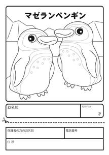 マゼランペンギン ぬりえ 応募用紙のイラスト素材 [FYI04116203]