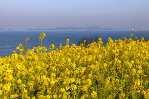 春に浮かぶ海の写真素材 [FYI04116271]