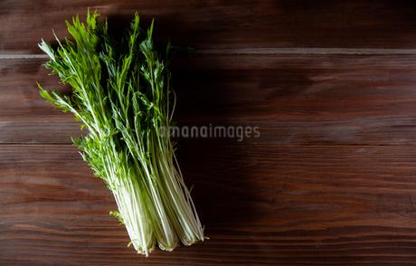 水菜の写真素材 [FYI04116317]
