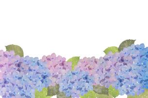 紫陽花水彩画のイラスト素材 [FYI04116372]