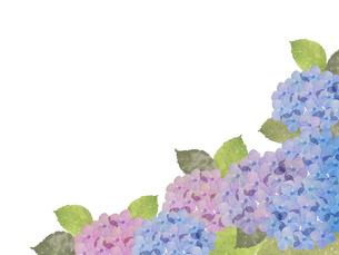 紫陽花水彩画のイラスト素材 [FYI04116373]