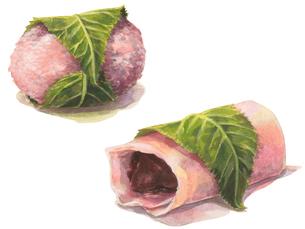東西の桜餅のイラスト素材 [FYI04116582]