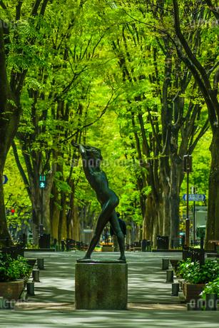 仙台定禅寺通りの新緑の写真素材 [FYI04116605]