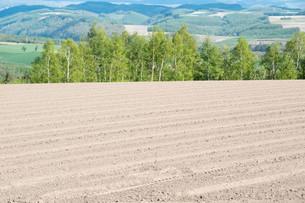 春の畑と新緑のシラカバ林の写真素材 [FYI04116839]