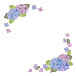 紫陽花フレームのイラスト素材 [FYI04116870]