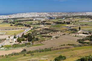 マルタ共和国イムディーナの果樹園の写真素材 [FYI04116925]