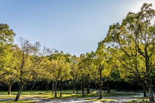 公園の森と青空の写真素材 [FYI04116965]