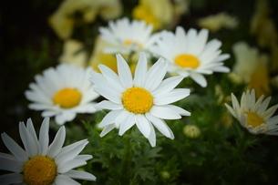 花の写真素材 [FYI04116982]
