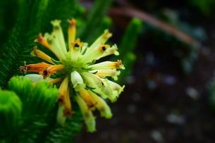 花の写真素材 [FYI04116995]