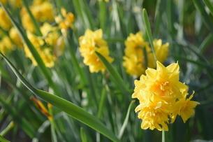 花の写真素材 [FYI04116996]