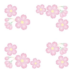 桜の花 背景素材 フレーム イラストのイラスト素材 [FYI04117009]