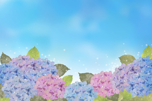 紫陽花水彩画のイラスト素材 [FYI04117063]