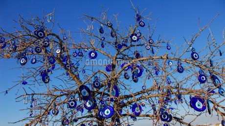カッパドキア、魔除けのガラスの目玉が下がる木の写真素材 [FYI04117435]