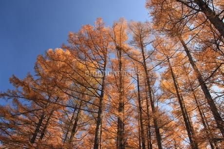 秋の信州の写真素材 [FYI04117447]