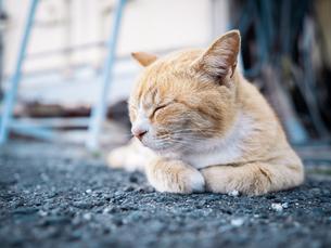 野良猫が路地裏で眠たそうにうとうとしている様子の写真素材 [FYI04117448]