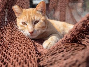 日向ぼっこする薄茶色の野良猫の様子の写真素材 [FYI04117450]