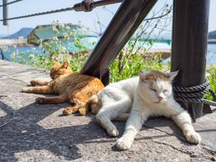 野良猫が昼寝している様子の写真素材 [FYI04117451]