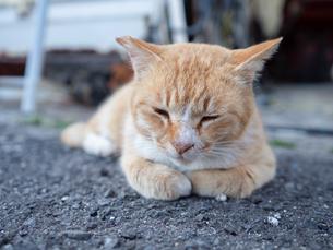 野良猫が路地裏で眠たそうにうとうとしている様子の写真素材 [FYI04117453]