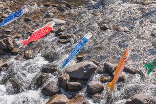 川の上を舞う鯉のぼりの写真素材 [FYI04117455]