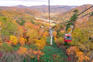 北海道 札幌のスキー場の紅葉の写真素材 [FYI04117576]