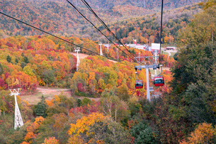 北海道 札幌のスキー場の紅葉の写真素材 [FYI04117577]