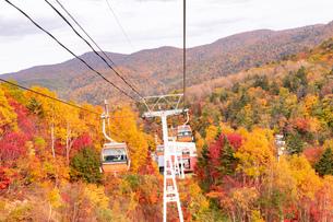 北海道 札幌のスキー場の紅葉の写真素材 [FYI04117578]