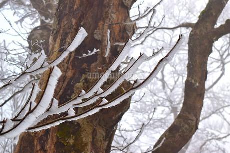 雪景色の写真素材 [FYI04117625]