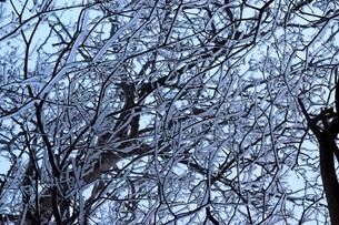 雪景色の写真素材 [FYI04117629]