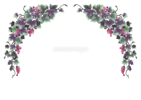 葡萄のイラストのフレーム(線無し)のイラスト素材 [FYI04117678]