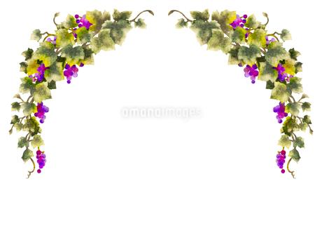 葡萄のイラストのフレーム(線無し)のイラスト素材 [FYI04117680]