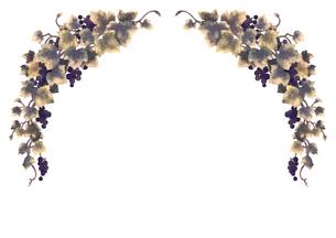 葡萄のイラストのフレーム(線無し)のイラスト素材 [FYI04117681]