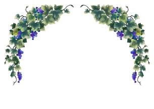 葡萄のイラストのフレーム(線無し)のイラスト素材 [FYI04117683]